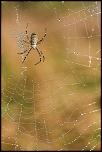 70-300 Sigma APO-arachnophobie-ii.jpg