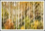 fichiers effacés : récupération-abstract-autumn.jpg