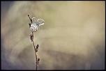Escarpillon