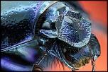 Nouveau Modérateur-scarab-h.jpg