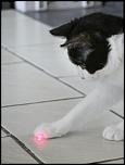 S5 Le  regard  Chatte au regard laser