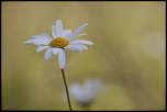 Très belle Rumeur ...-fontenay-sur-eure_22-06-2014-15-56-33_0699.jpg