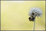 Très belle Rumeur ...-cajarc_31-07-2013-09-00-45_0091.jpg