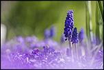 -seresville_21-04-2013-12-09-36_0205.jpg
