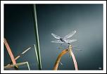 Télécommande infrarouge-img_4150-lr3-g-fs1-m.jpg