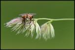 Insecte qui fait mouche