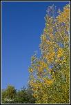 vos avis-automne_s41.jpg
