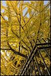 Sem41 automne