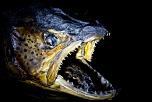 Qui a déjà acheté chez Digit-Photo.com-47-low-7646.jpg