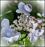 semaine 9 le printemps 3965