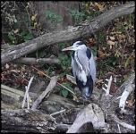 crop heron