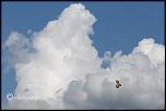 initiation vautours
