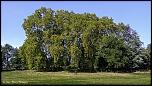 Bosquet d'arbres