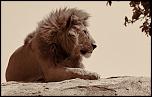 mon safari photo
