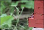 nettoyage-gardiennes-de-ruche.jpg