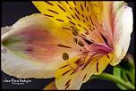 Petite question..-07-fleur-mouchetee-03.jpg