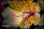 Petite question..-06-fleur-mouchetee-02.jpg