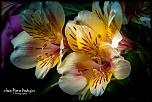 Petite question..-05-fleur-mouchetee-01.jpg
