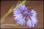 70-300 Sigma APO-fleurs-0014.jpg