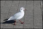 Choix de sacs-oiseaux-0014.jpg