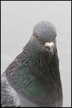 Choix de sacs-oiseaux-0010.jpg