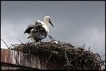 Choix de sacs-oiseaux-0011.jpg