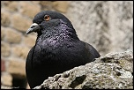 Choix de sacs-oiseaux-0006.jpg