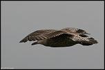 Choix de sacs-oiseaux-0004.jpg