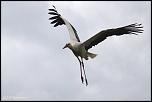 Choix de sacs-oiseaux-0013.jpg