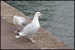 Choix de sacs-oiseaux-0015.jpg