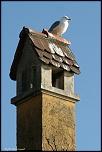 Choix de sacs-oiseaux-0009.jpg