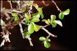 feuilles 0025