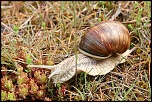 escargots 003