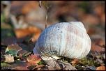 escargots 005