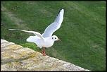 Choix de sacs-oiseaux-0017.jpg