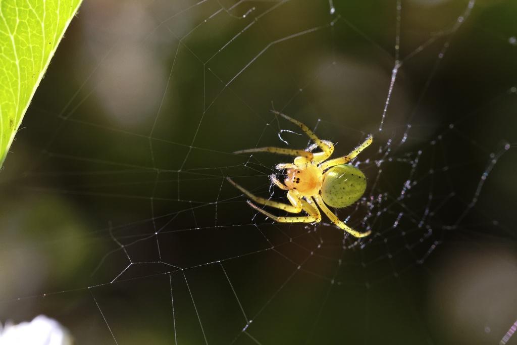 Gallerie-macro-insecte-araignee-h3-130511.jpg