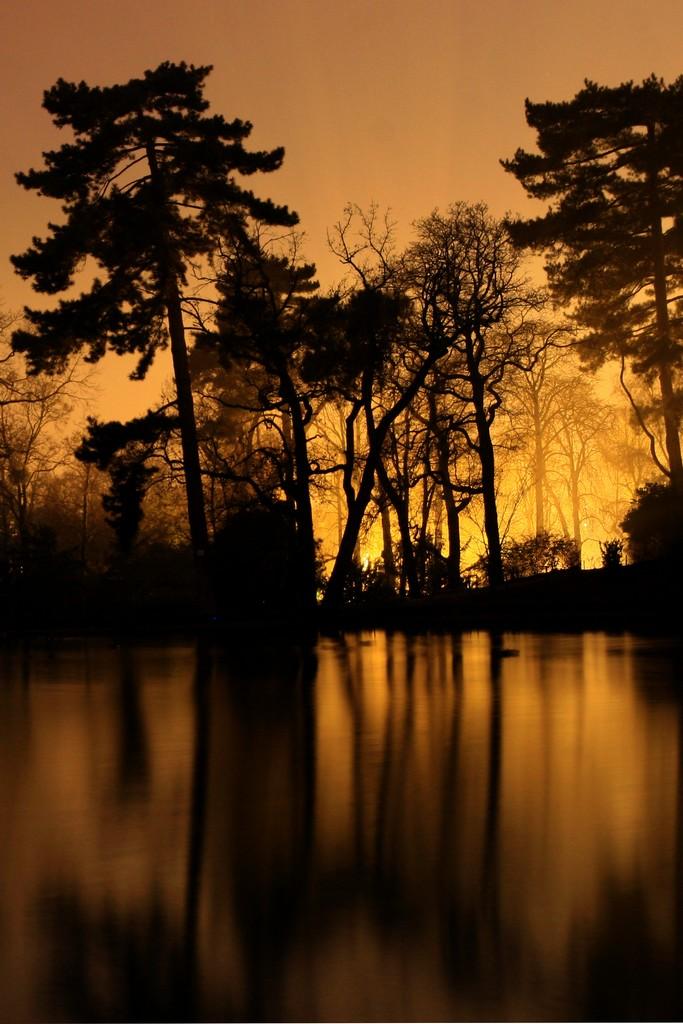 bois vol la nuit - photo #27