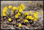 KVLF n° 46 : Le printemps arrive....