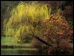 Au milieu de l'étang