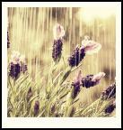 KIVA le faire n° 89 : Pluie et parapluie...