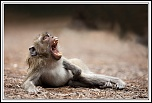 members/erika/albums/macaques/12473-vos-gueules.jpg