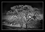 members/gdersca/albums/national-park-yosemite-ca/29899-one.jpg