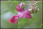 members/soizik/albums/la-montagne-et-ses-fleurs/32984-img-9074http-www-eos-numerique-com-album-php-albumid-3278-attachmentid-32984.jpg